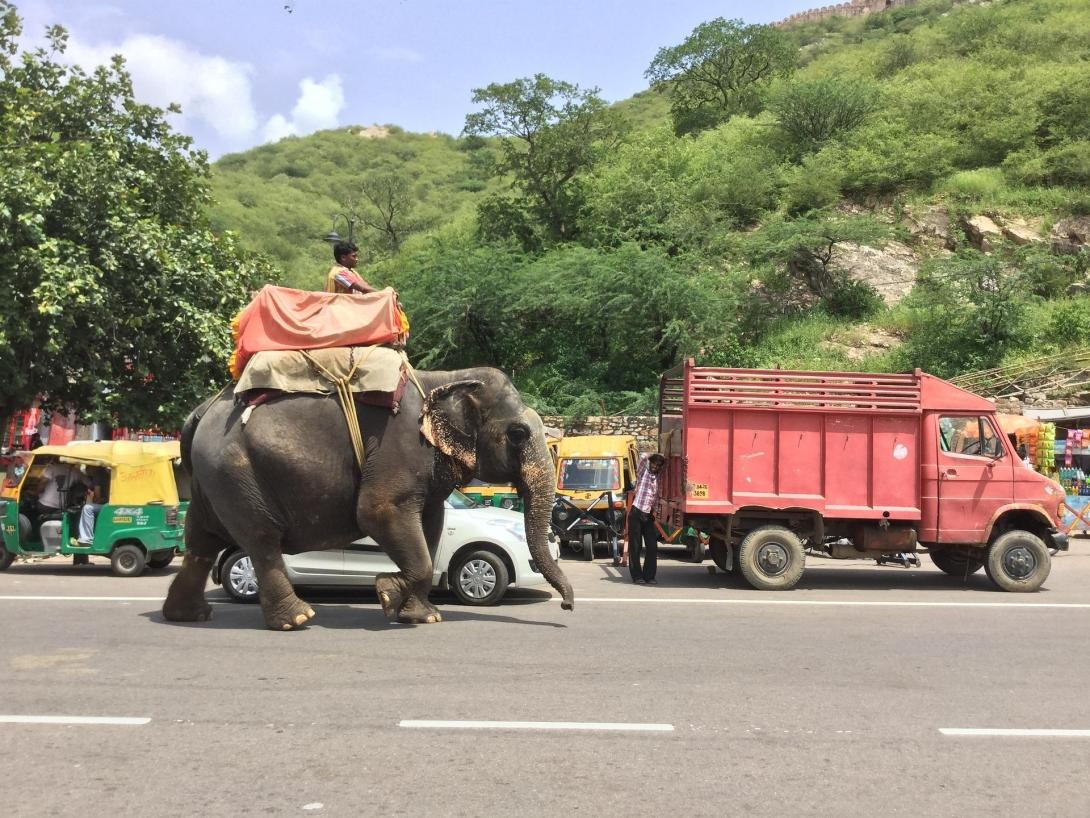 An elephant walking through the busy streets and traffic